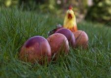 Vier Pasen gekleurde eieren op het gras met een valse kip Royalty-vrije Stock Afbeelding