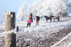 Vier Pferde Stockbild