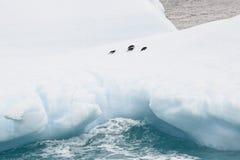 Vier pinguïnen die op een ijsberg in Antarctica rusten royalty-vrije stock afbeelding