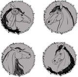 Vier Porträts von Pferden stock abbildung