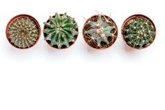 Vier potten met cactussentribune op een rij op een witte houten achtergrond Stock Foto