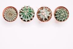 Vier potten met cactussentribune op een rij op een witte houten achtergrond retro Stock Afbeeldingen