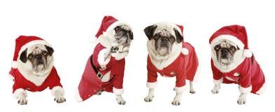 Vier Pugs als Santa Claus lizenzfreie stockfotos