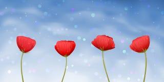 Vier rode papaver-bloemen op blauwe achtergrond Royalty-vrije Stock Afbeeldingen