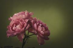 Vier Rosen über Grün lizenzfreie stockfotografie