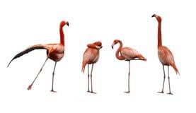 Vier roze flamingovogels Royalty-vrije Stock Foto's