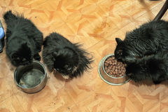 Vier schwarze Katzen essen Stockbilder