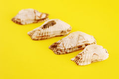 Vier Seashells Lizenzfreie Stockfotos