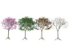 Vier seizoenen. royalty-vrije illustratie