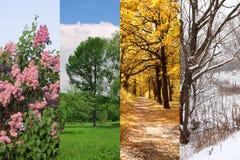 Vier seizoenen springen, de zomer, de herfst, de winter op Stock Afbeelding