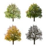 Vier seizoenen van boom stock foto's