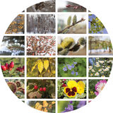 Vier seizoenencollage Stock Fotografie