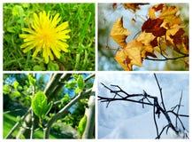 Vier seizoeneninzameling Royalty-vrije Stock Afbeeldingen