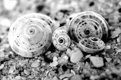 Vier shells stock foto