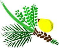 Vier Species voor Versie 2 van Rosh Hashana Stock Afbeeldingen
