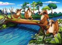 Vier speelse wilde dieren die de rivier kruisen Stock Afbeelding