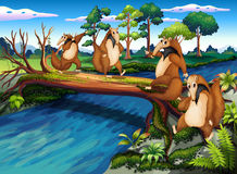 Vier spielerische wilde Tiere, die den Fluss kreuzen Stockbild