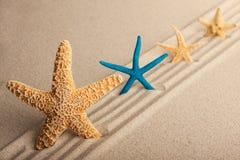 Vier Starfish im Sand Lizenzfreies Stockbild