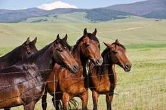 Vier stattliche Pferde Stockfotografie