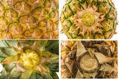 Vier texturen van verschillende types van ananas pellen - bovenkant, bodem en zijaanzicht Royalty-vrije Stock Afbeelding