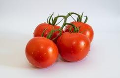 Vier Tomaten auf weißem Hintergrund stockbilder