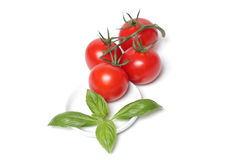 Vier tomaten met basilicumblad Royalty-vrije Stock Foto's