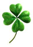 Vier trieben Shamrock Blätter Stockfotografie
