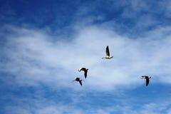 Vier Vögel, die gegen eine weiße Wolke in einem blauen Himmel fliegen Lizenzfreie Stockbilder