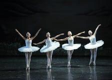 Vier weinig het zwaan-Zwaan oever van het meer-Ballet Zwaanmeer Royalty-vrije Stock Afbeelding