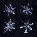 Vier wirkliche Schneeflocken lokalisiert Lizenzfreies Stockfoto