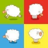 Vier Witte die Sheeps op gekleurde achtergrond wordt geïsoleerd Stock Foto's