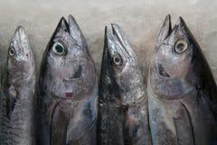 Vier zilveren-grijze overzeese vissentonijn op ijs in de ochtend op een visserijmarkt in Zuid-India Stock Afbeeldingen