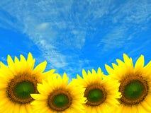 Vier Zonnebloemen Royalty-vrije Stock Afbeelding