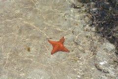 Vierbeinige Starfish in San Blas, PanamÃ-¡ Stockfotografie