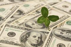 Vierblättriges Kleeblatt, das auf Bündel des Dollars - horizontal wächst Stockbild