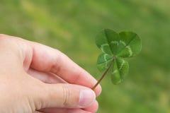 Vierblättriges Kleeblatt in der Hand horizontal auf einem Grün stockfoto