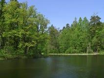 vierge de forêt photographie stock libre de droits