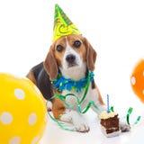 Viering van de de verjaardagspartij van het huisdier de eerste Royalty-vrije Stock Afbeeldingen