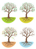 Vierjahreszeitenbaum Stockbilder