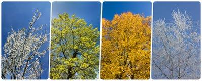Vierjahreszeitencollage von den vertikalen Fahnen mit Bäumen und blauer SK Stockbilder