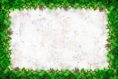 Vierkant graskader met exemplaar-ruimte op zandachtergrond Royalty-vrije Stock Afbeeldingen