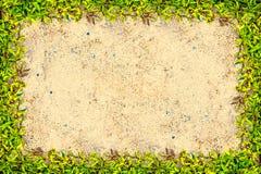 Vierkant graskader met exemplaar-ruimte op zandachtergrond Royalty-vrije Stock Foto's