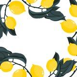 Vierkant kader met citroenentakken stock illustratie