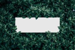Vierkant kader, Spatie voor de reclame van kaart of uitnodiging Stock Afbeeldingen