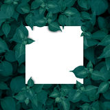 Vierkant kader, Spatie voor de reclame van kaart of uitnodiging Royalty-vrije Stock Afbeeldingen