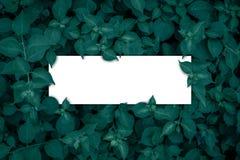 Vierkant kader, Spatie voor de reclame van kaart of uitnodiging Stock Foto