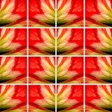 Vierkant vormenhoogtepunt van Amaryllis-bloemtextuur Stock Afbeeldingen