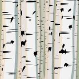Vierkante illustratie van boomstammenberken. Royalty-vrije Stock Afbeeldingen