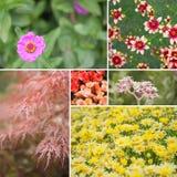 Vierkante Maine-bloemcollage royalty-vrije stock foto
