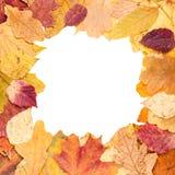 Vierkante omlijsting van gele de herfstbladeren Royalty-vrije Stock Afbeelding